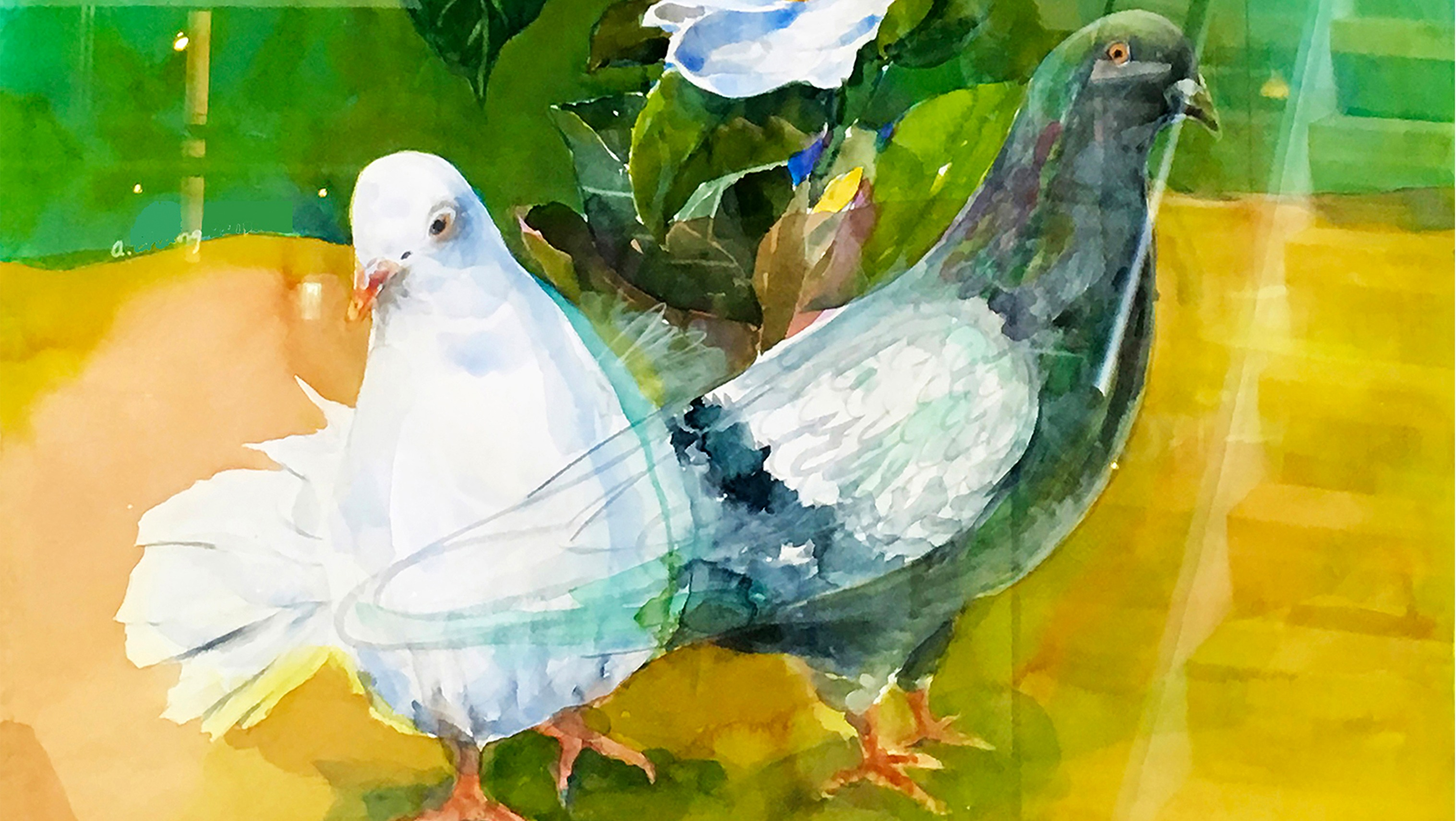 watercolor of a dove and a pigeon