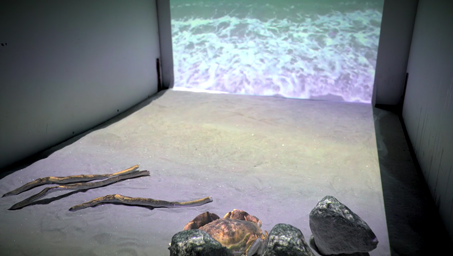 Ocean view with rocks and sticks. Waves projected on a wall with sand spread across the floor.