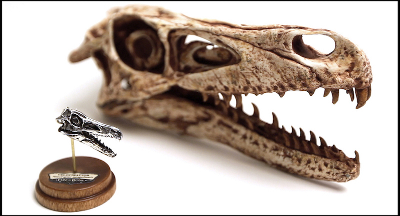 "An image of a velociraptor skull 3D scanned and printed into a miniature skull replica by<strong> </strong><strong></strong>Jason Bakutis<span class=""redactor-invisible-space""><strong>.</strong></span>"
