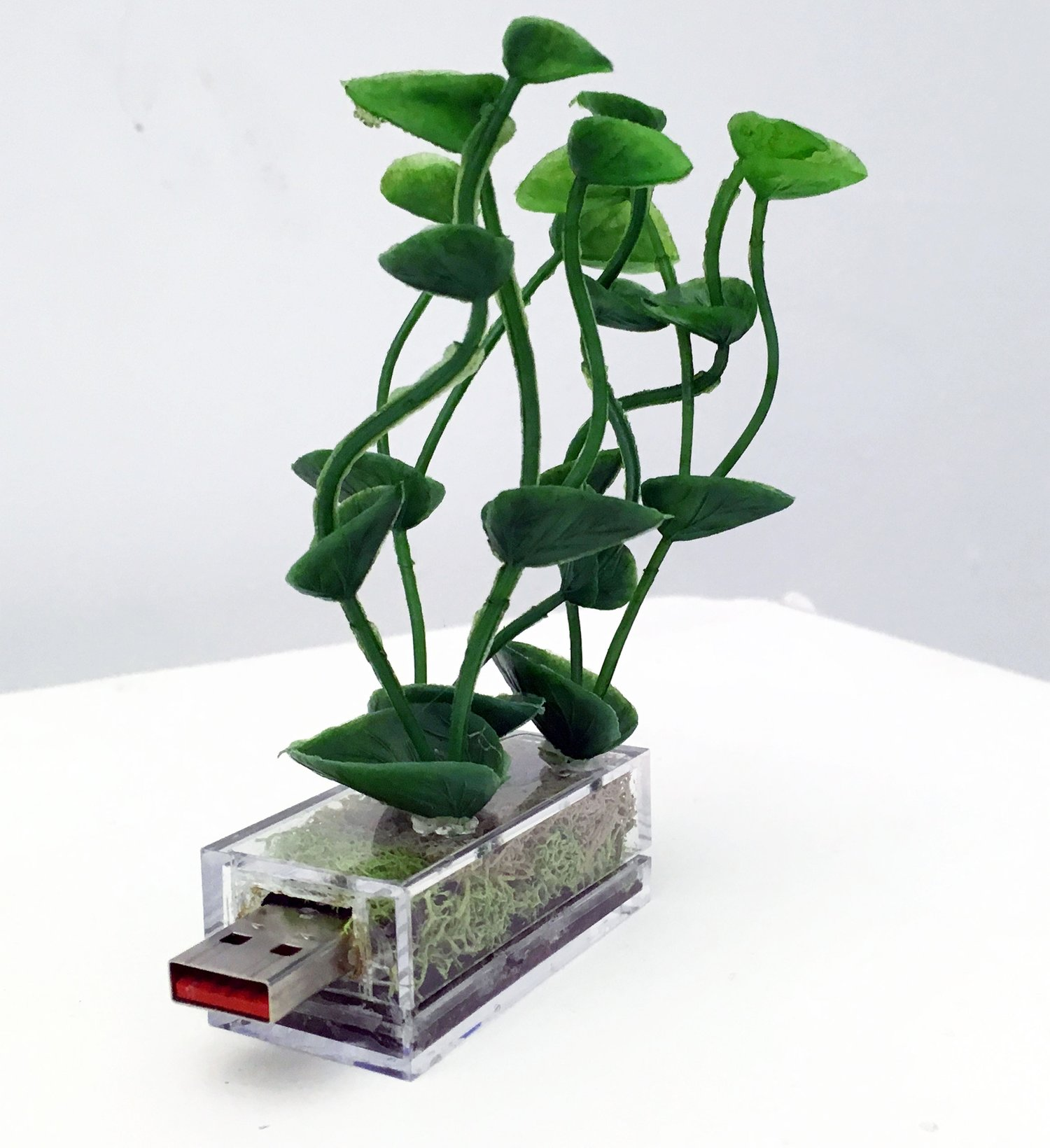 """<p """"="""""""">A clear box contains roots and a plant grows out the top. a USB port sticks out one side of the box"""