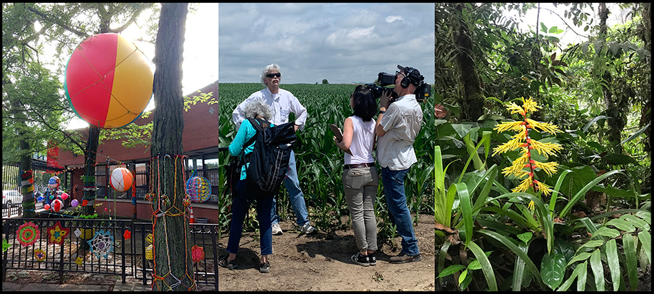 """<p """"="""""""">A three-paneled image. From left: A balloon tied to a tree, a man being filmed in front of a field of crops, and a yellow flower surrounded by green leaves in a forest."""