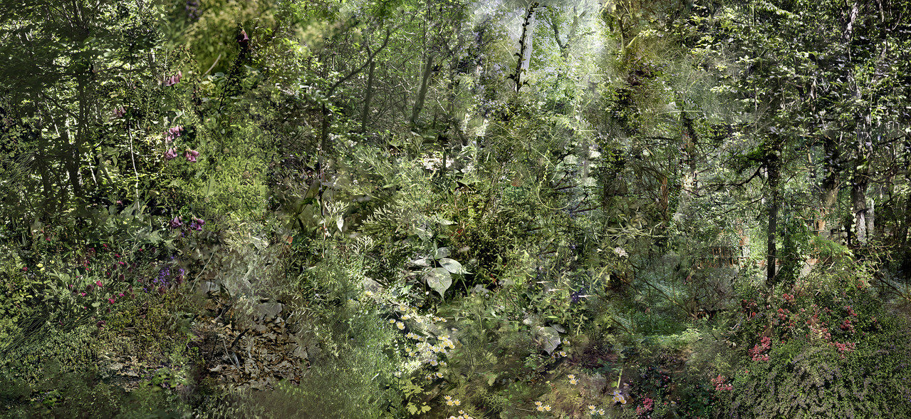 An overview of a forest.