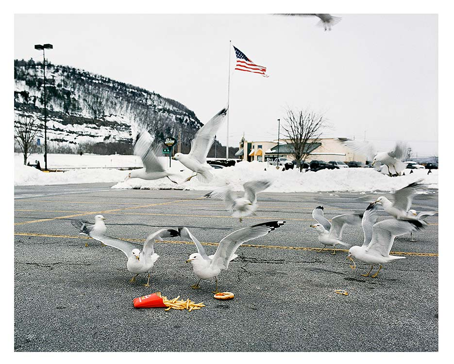 Photograph of seagulls eating french fries off of pavement in front of fast food restaurant, all taking place against a snowy backdrop.