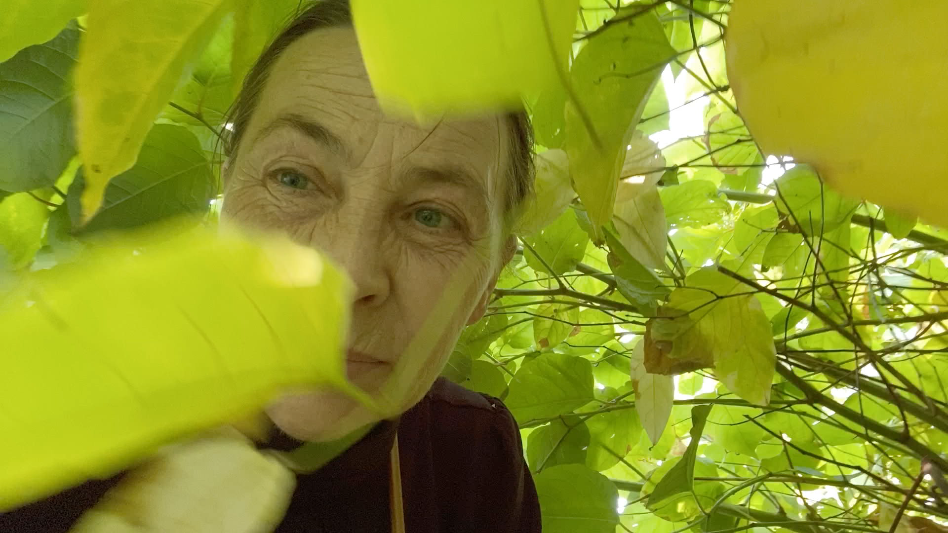 Shaded by green leaves as the sunlight peaks through, an older woman is close in frame.